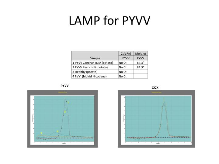 Lamp for pyvv