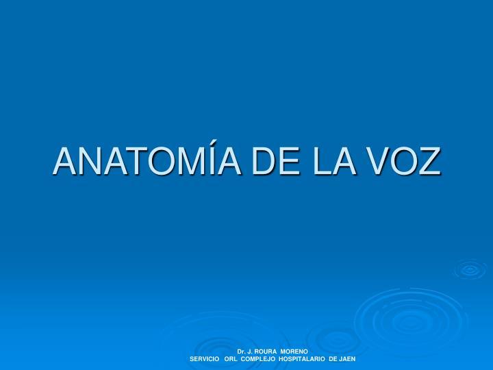 PPT - ANATOMÍA DE LA VOZ PowerPoint Presentation - ID:3286698