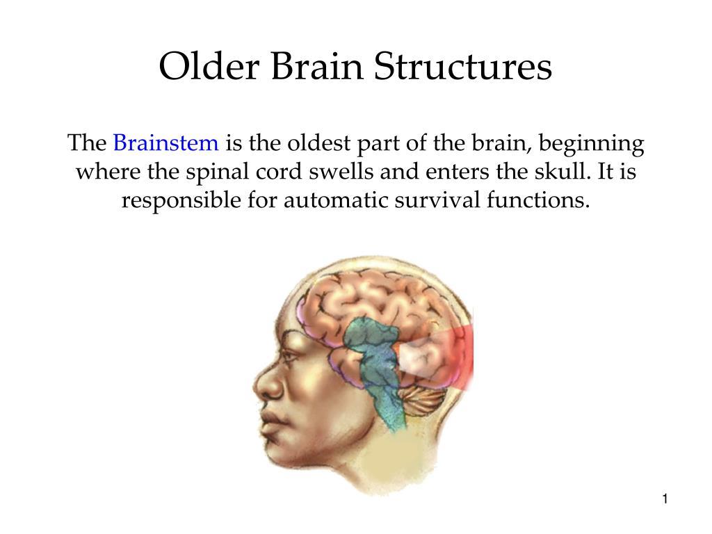 Ppt Older Brain Structures Powerpoint Presentation Id3287823