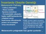 nsanlarda obezite geneti i melanocortin pathway