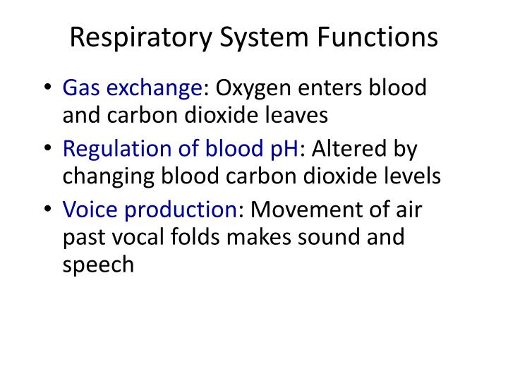 PPT - The Respiratory System PowerPoint Presentation - ID:3291389