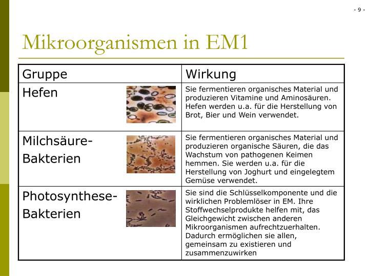 Mikroorganismen in EM1