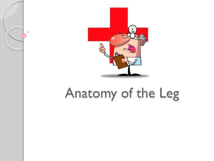 Anatomy of the Leg