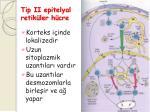 tip ii epitelyal retik ler h cre