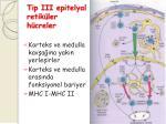 tip iii epitelyal retik ler h creler