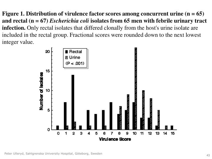 Figure 1. Distribution of virulence factor scores among concurrent urine (n = 65) and rectal (n = 67)