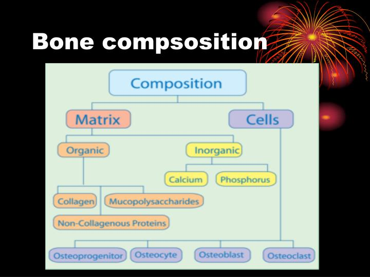 bone compsosition n.