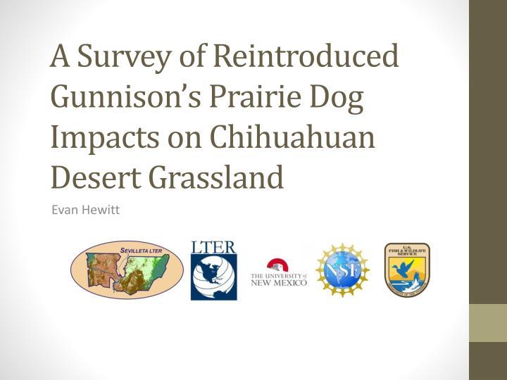 A survey of reintroduced gunnison s prairie d og i mpacts on chihuahuan desert grassland