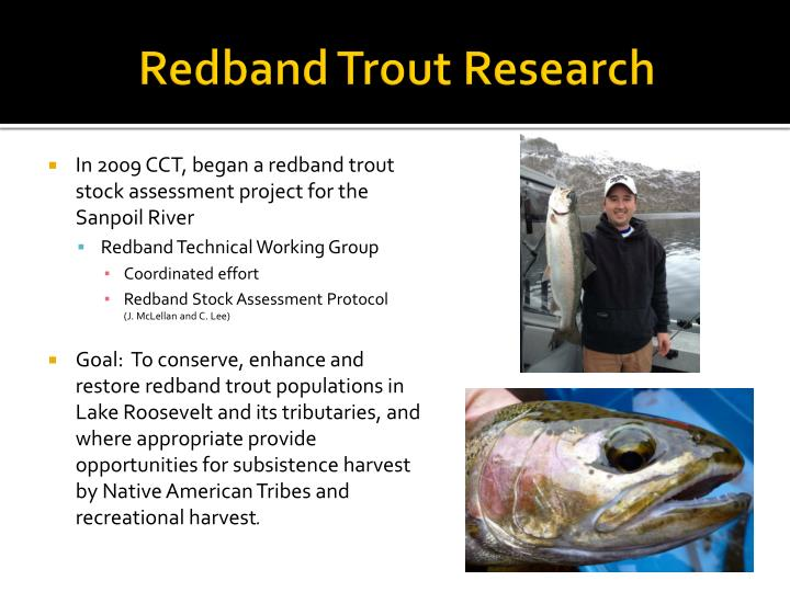 Redband trout research