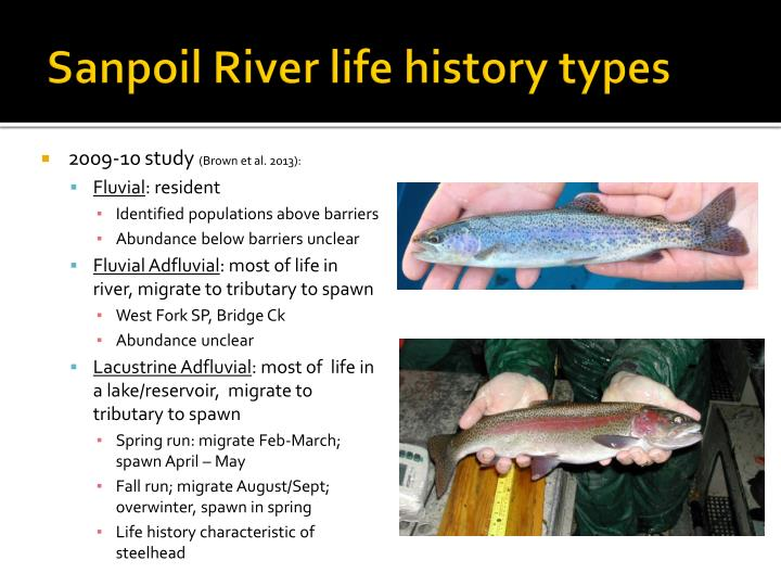 Sanpoil River life history types