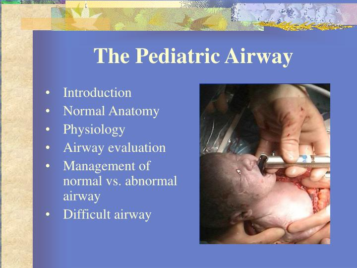 Ppt Basics Of Pediatric Airway Anatomy Physiology And Management