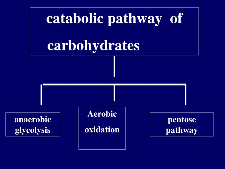 catabolic pathway  of