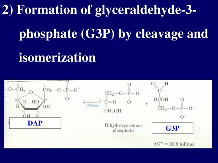2) Formation of glyceraldehyde-3-