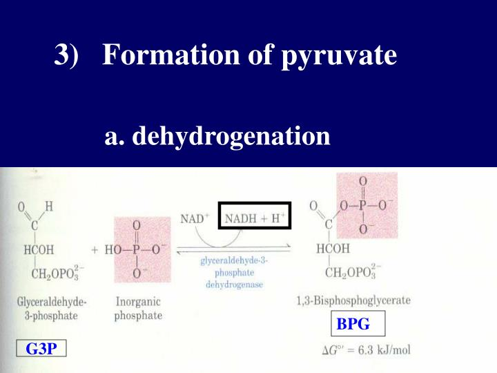 3)   Formation of pyruvate
