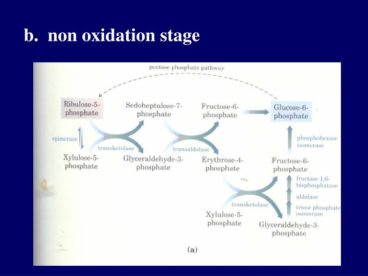 b.  non oxidation stage