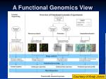 a functional genomics view