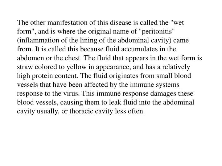"""The other manifestation of this disease is called the """"wet form"""", and is where the original name of """"peritonitis"""" (inflammation of the lining of the abdominal cavity) came from. It is called this because fluid accumulates in the abdomen or the chest. The fluid that appears in the wet form is straw colored to yellow in appearance, and has a relatively high protein content. The fluid originates from small blood vessels that have been affected by the immune systems response to the virus. This immune response damages these blood vessels, causing them to leak fluid into the abdominal cavity usually, or thoracic cavity less often."""