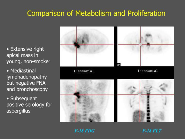 Comparison of Metabolism and Proliferation