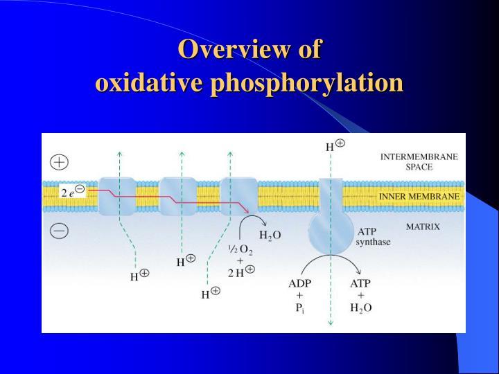 overview of oxidative phosphorylation n.