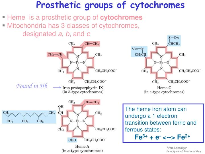 Prosthetic groups of cytochromes