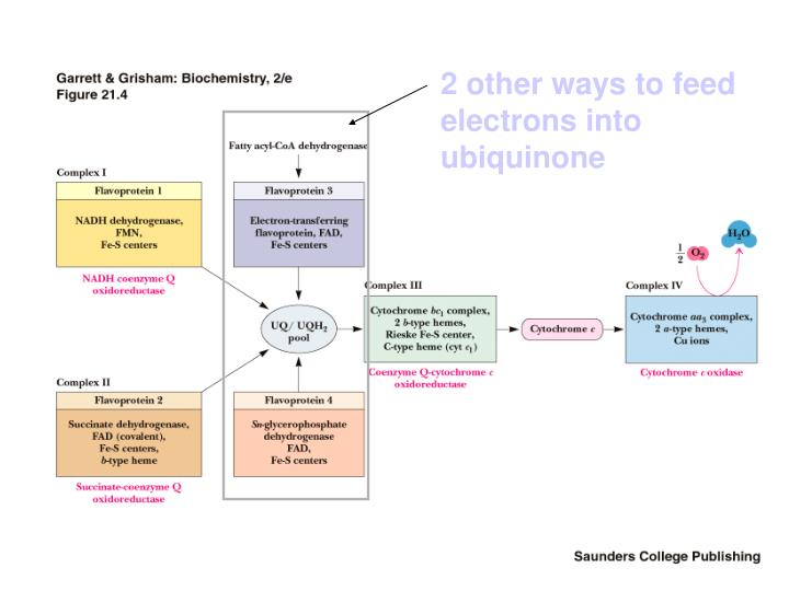 2 other ways to feed electrons into ubiquinone
