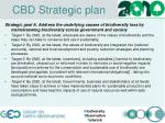 cbd strategic plan