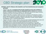 cbd strategic plan3