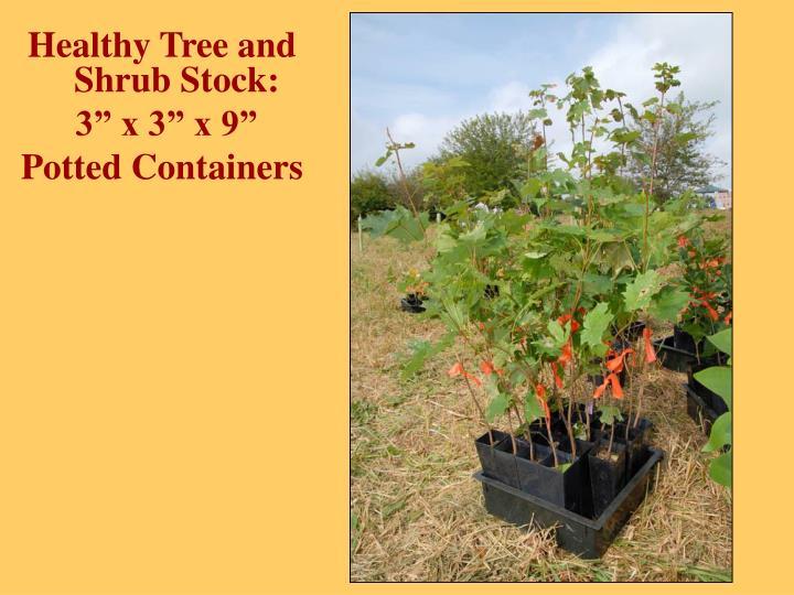 Healthy Tree and Shrub Stock: