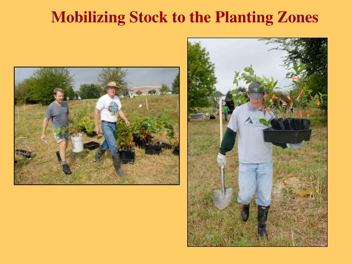 Mobilizing Stock to the Planting Zones