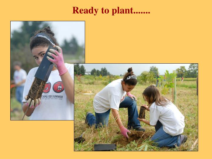 Ready to plant.......