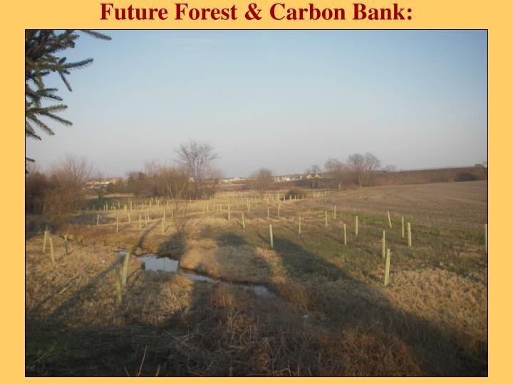 Future Forest & Carbon Bank: