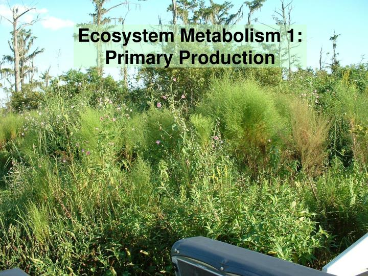 ecosystem metabolism 1 primary production n.