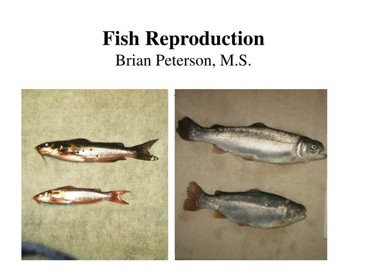 fish reproduction brian peterson m s
