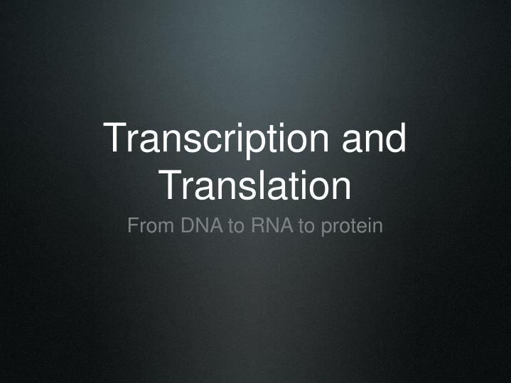 transcription and translation n.