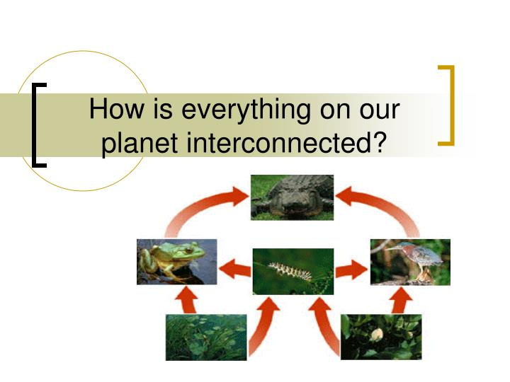 how is everything on our planet interconnected n.