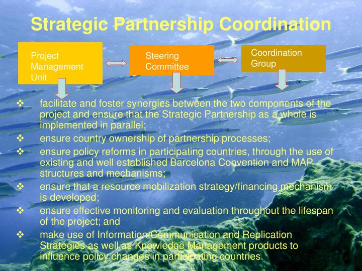 Strategic Partnership Coordination