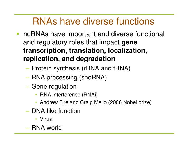 Rnas have diverse functions