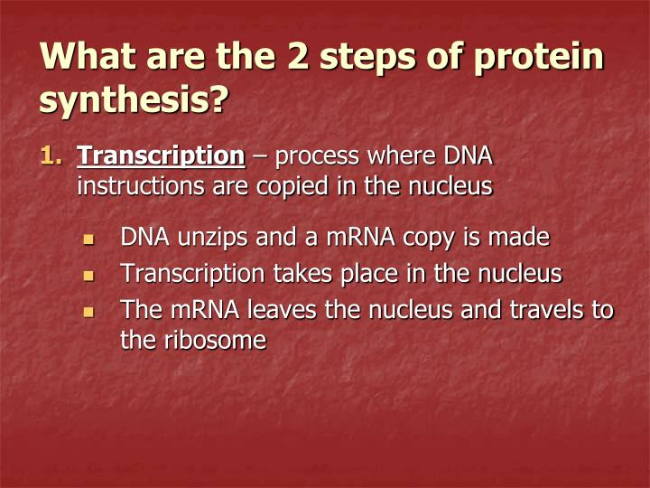 DNA unzips and a mRNA copy is made