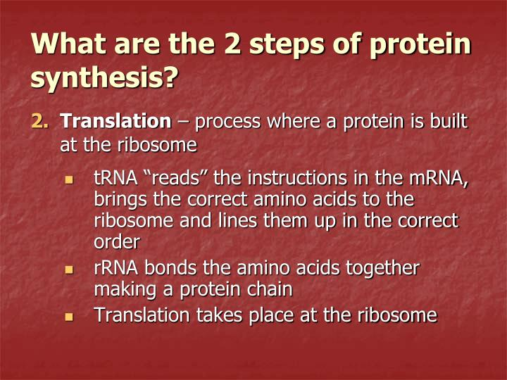 "tRNA ""reads"" the instructions in the mRNA, brings the correct amino acids to the ribosome and lines them up in the correct order"
