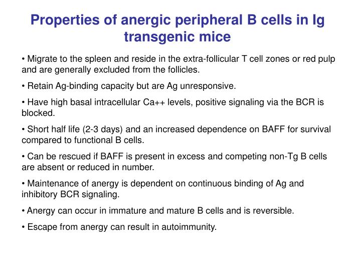Properties of anergic peripheral B cells in Ig