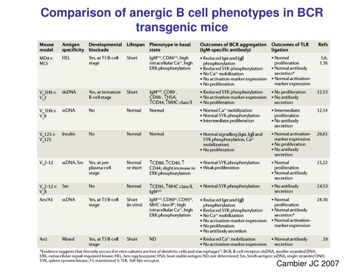 Comparison of anergic B cell phenotypes in BCR transgenic mice