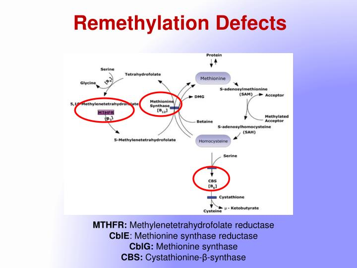 Remethylation Defects