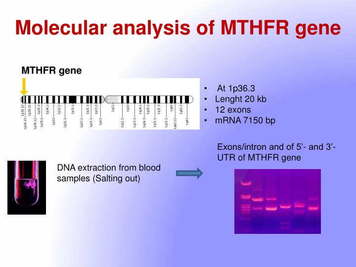Molecular analysis of MTHFR gene
