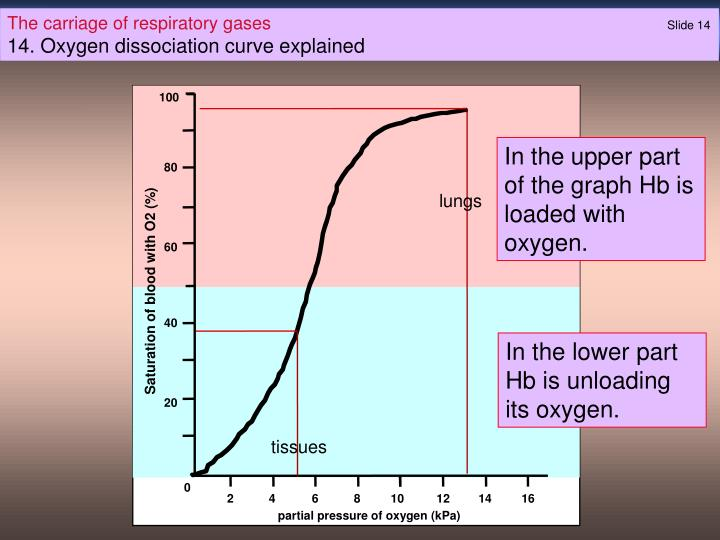 Ppt The Carriage Of Respiratory Gases Slide 0 Powerpoint