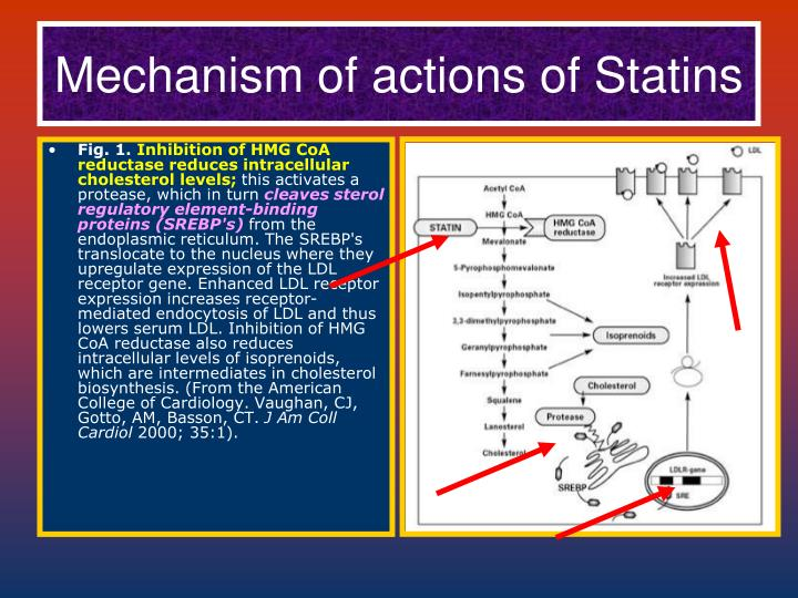 Mechanism of actions of Statins