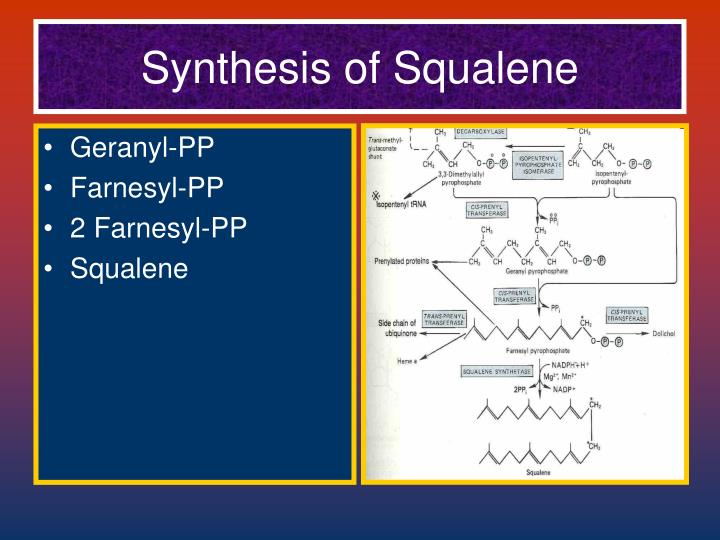 Synthesis of Squalene