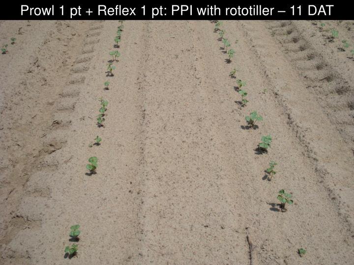 Prowl 1 pt + Reflex 1 pt: PPI with rototiller – 11 DAT