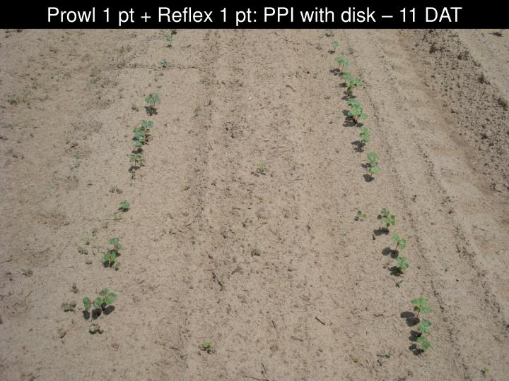 Prowl 1 pt + Reflex 1 pt: PPI with disk – 11 DAT