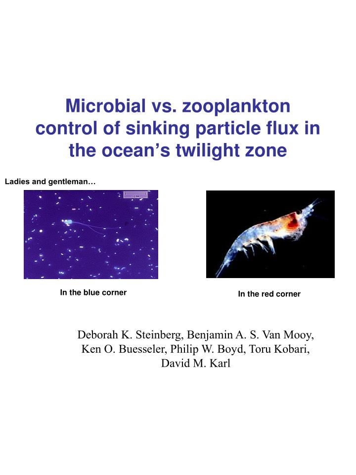 Ppt microbial vs zooplankton control of sinking particle flux in microbial vs zooplankton control of sinking particle flux in the oceans twilight zone toneelgroepblik Image collections
