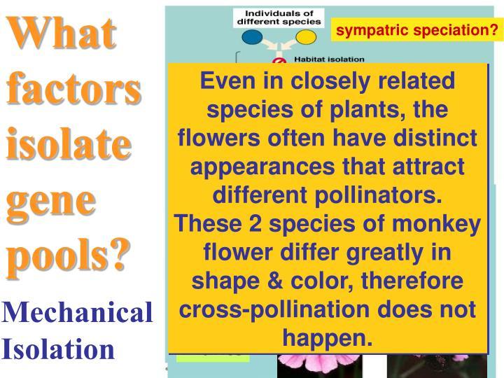 What factors isolate gene pools?